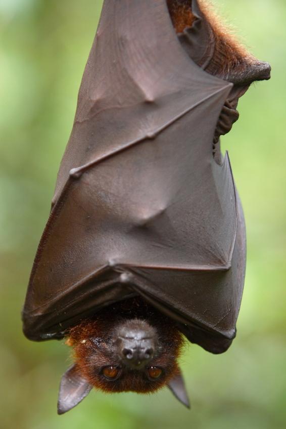 Damn, Fruit Bats. You scary!